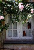 Alten abisolierten Fenster mit Rosengarten um — Stockfoto