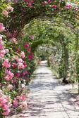 Fantastic luxuriant rose garden path — Stock Photo