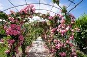 Romantic rosebed walk under blue sky to Genoa Nervi park — Stock Photo