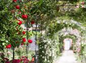 Romantic outdoor walk with rosegarden — Stock Photo
