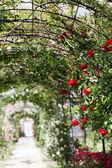 Very romantic rosegarden path in outdoor scene — Stock Photo