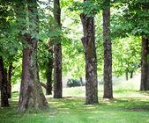 Horse chestnut park — Stock Photo