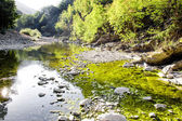 Glimpse of a river with green reflection — Stock Photo