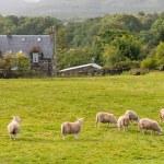 Scottish Farmland — Stock Photo #63705947