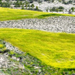 Landscape background with yellow meadow — Stock Photo #69327571