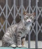 Portrait of a grey domestic cat sitting. — Stock Photo