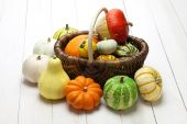 Colorful pumpkin and squash collection — Stock Photo