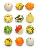 Colorful pumpkin squash collection — Stock Photo