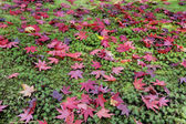 Ginkakuji Precinct Garden — Stock Photo