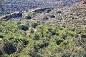 Vai Palm Forest Crete Greece — Stockfoto
