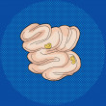 Постер, плакат: Food Inside Small Intestine
