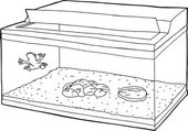 Outline of Frog in Aquarium — Vetor de Stock