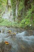 Forêt d'automne vintage — Photo