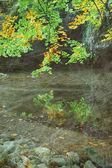 Vintage autumn forest — Stock Photo