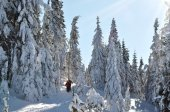 Back country skiers — Stock fotografie