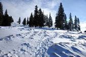 山の冬 — ストック写真