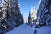 Zasněžené cesty v lese — Stock fotografie