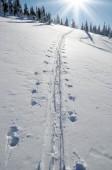 Ski tracks in the snow — Stock Photo