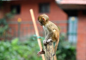 A baby monkey sitting on a fence — Photo