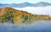 Colorful autumn forest mountain landscape — Stock Photo