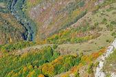 Färgglad höst skog bergslandskap — Stockfoto