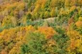 Góra jesień krajobraz kolorowy las — Zdjęcie stockowe
