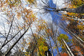 Autumn tree canopy in the forest — Foto de Stock