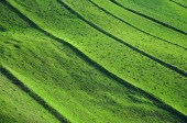 Green field background, spring theme — Stock Photo