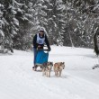 Dog sledding with huskies — Stock Photo #64611831