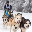 Dog sledding with husky dogs — Stock Photo #64612173
