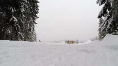 Dogsled race with Husky dogs — Stock Video