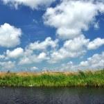 Waterline in the Danube delta, Romania — Stock Photo #67568853