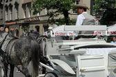 Horse driven carriage in Krakow, Poland — Stock Photo