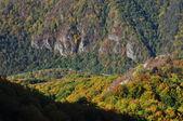 Autumn fall foliage — Stock Photo