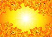 Cornice foglie gialle — Vettoriale Stock