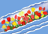 Colorful tulips with torn paper borders — Stockvector
