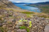 Seal bay, of Westfjords, Iceland — Stock Photo