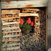 Corner with firewood — Stock Photo
