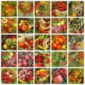 Autumnal pattern — Stock Photo