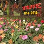 Постер, плакат: Beijing Chrysanthemum Festival