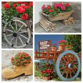 Decorative flowers containers — Foto Stock