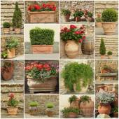 Collection of elegant clay retro planters — Foto Stock
