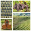 Chianti wine collage — Stock Photo #59723707