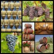 Chianti winemaking collage — Stock Photo #61516029