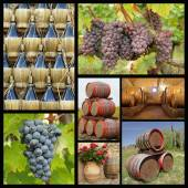Chianti winemaking collage — Stock Photo