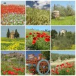 Tuscan spring  collage — Stock Photo #66308775