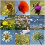Floral springtime collage — Stock Photo #67165565