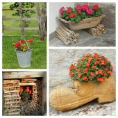 Rustic planters with flowers — Stock Photo