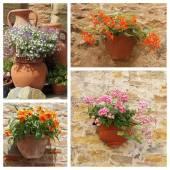 Classic ceramic planters — Foto Stock