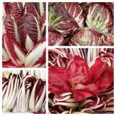Italian red Radicchio — Stock Photo